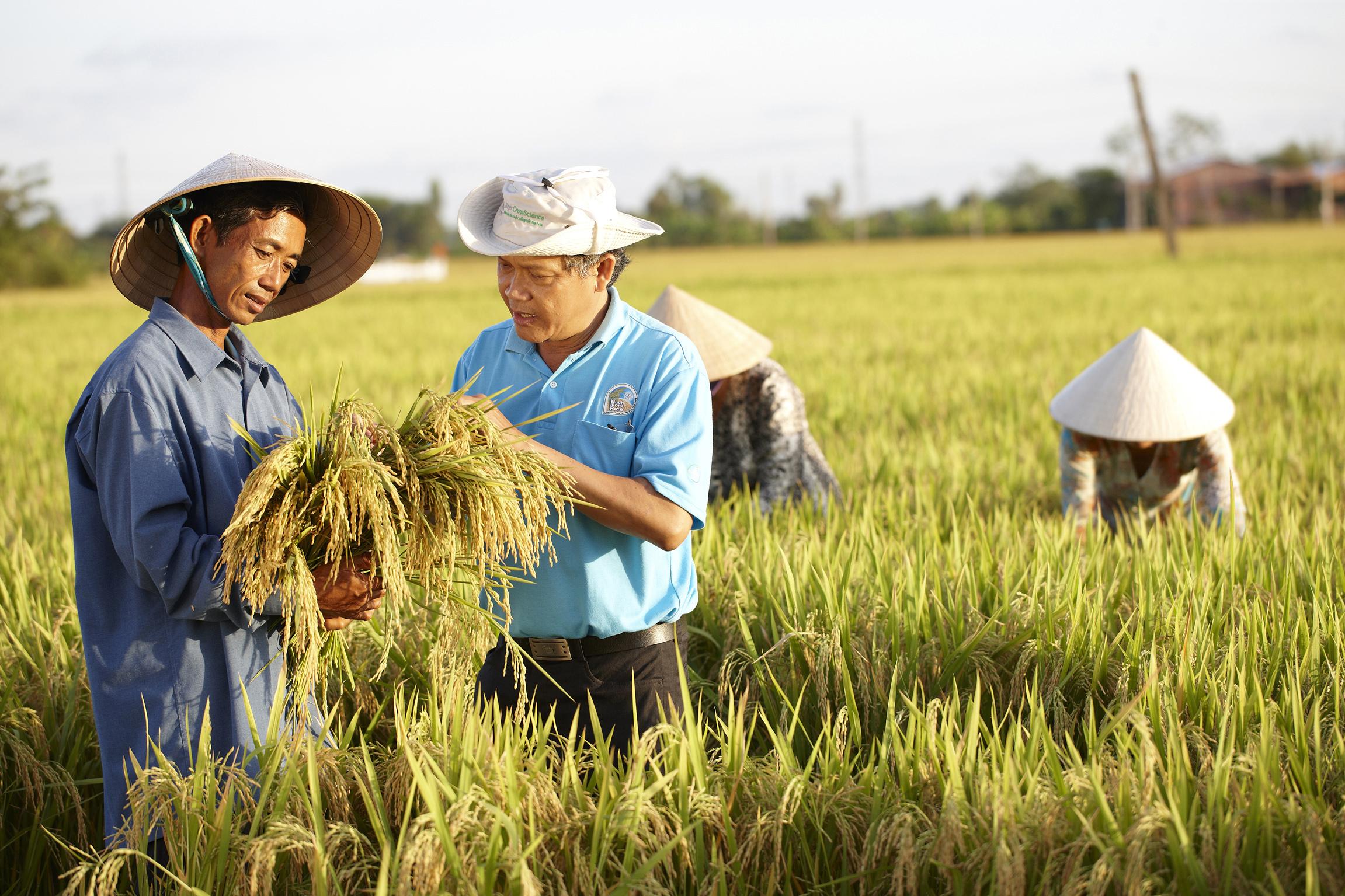 PR-Foto der Bayer-Sparte Crop Science, die nach der Monsanto-Übernahme wachsen würde: Die Bayer-Division ist nach eigenen Angaben eines der weltweit führenden Crop-Science-Unternehmen im Bereich Saatgut, Pflanzenschutz und Schädlingsbekämpfung. Kritiker finden das Geschäftsmodell wenig nachhaltig. / Foto: Bayer