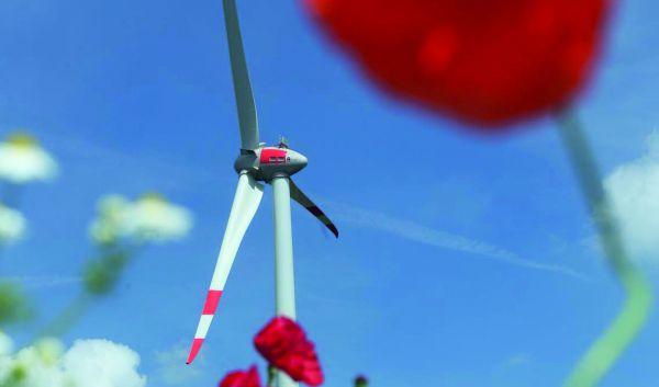 Energiekontor_Flögeln-Blumen_300-2