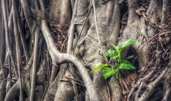 Nachhaltiges Wachstum und grüne Rendite kann man auf unterschiedliche Weise erzielen. Wir stellen drei Anlageprodukte vor. / Foto: Pixabay