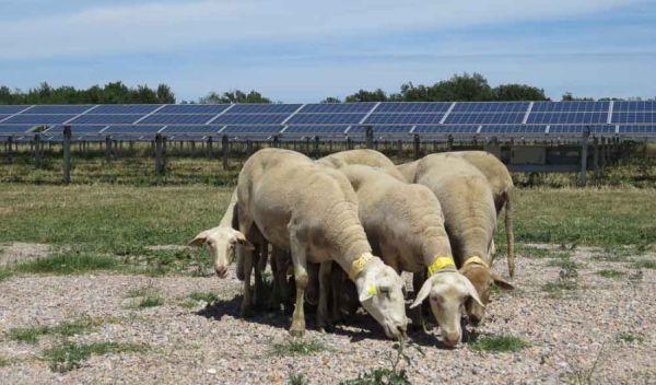 Dieser französische Solarpark wurde mit Technik von Canadian Solar ausgestattet. Der Solarkonzern leidet unter dem Preisverfall bei Photovoltaikmodulen. / Foto: Canadian Solar