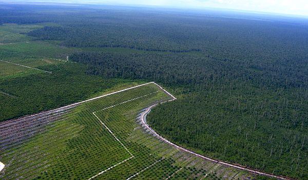 Palmölplantage in Indonesien ROBIN WOOD_600x352